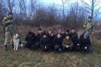 Мигранты для пересечения границы Украины «маскировались» под животных