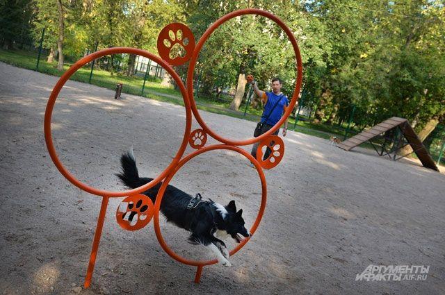 Площадок для выгула собак в городе катастрофически не хватает.