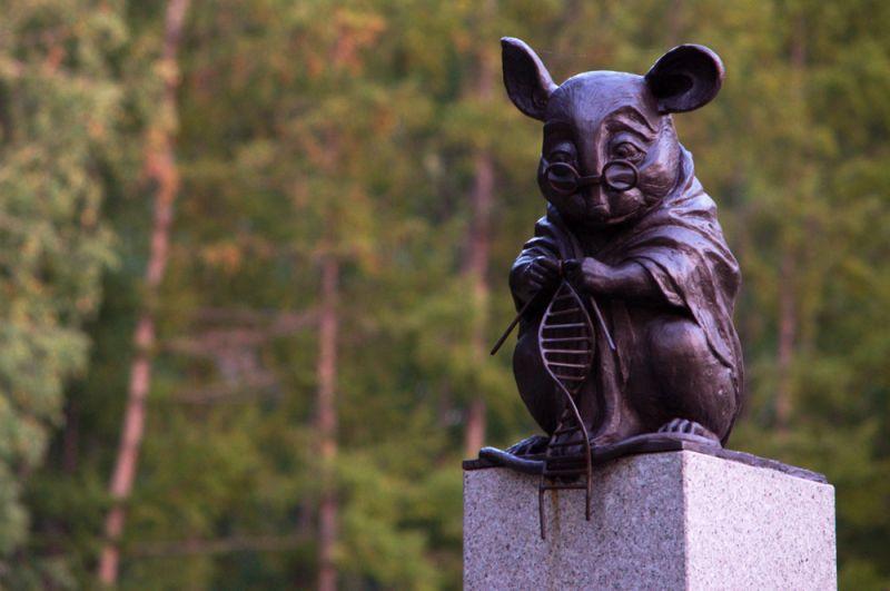 Памятник лабораторной мыши, новосибирский Академгородок. Скульптура символизирует благодарность этим животным за то, что человек имеет возможность использовать их для исследований и разработки новых лекарств.