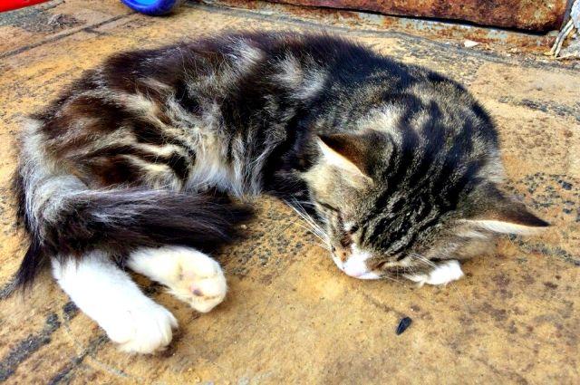 Хозяева кота намерены защищать права всех  животных.
