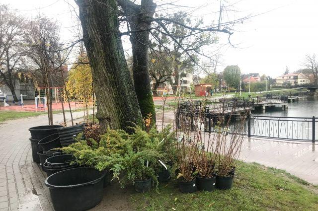 На озере Поплавок высадили 50 деревьев и 70 кустарников