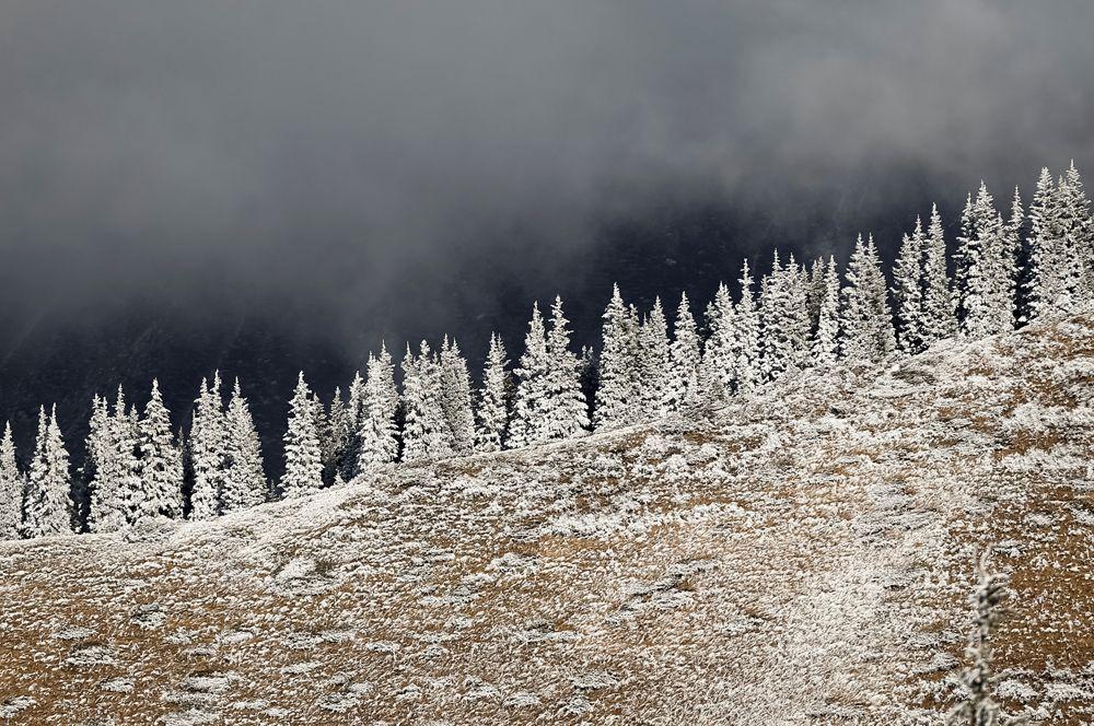 Покрытые инеем деревья в горах под Алматы, Казахстан.