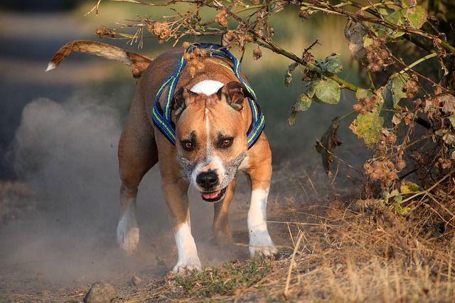 Хозяйка не смогла справиться с собакой и вызвала спасателей
