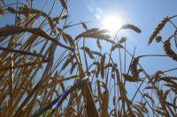 В Пономаревском районе из-за разгерметизации нефтепровода пострадали поля сельхозназначения.