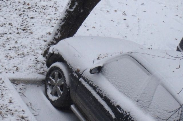 Щенок находится в машине около суток.