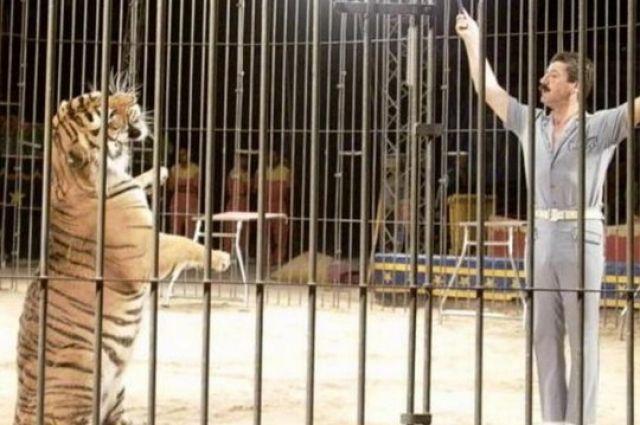 Одесский цирк эксплуатирует животных несмотря на запрет суда