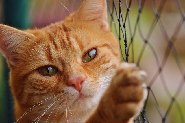 В США изолирован кот из приюта, выпускавший других животных на свободу