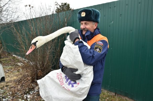 За белую птицу переживали десятки тюменцев, не оставили ситуацию без внимания и сотрудники МЧС.