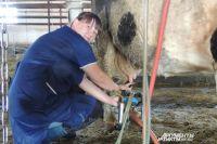 Специальная программа управления позволит держать под контролем каждую корову.