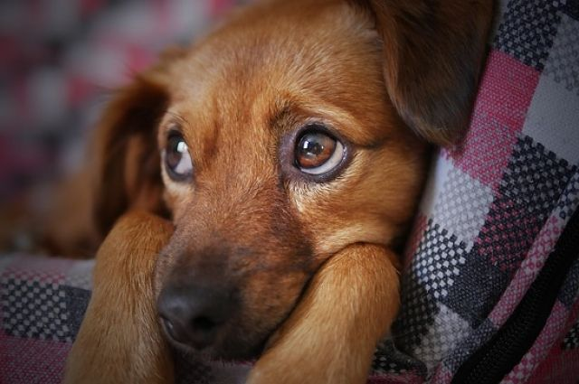 Жителя Татарстана приговорили к исправительным работам за убийство собаки