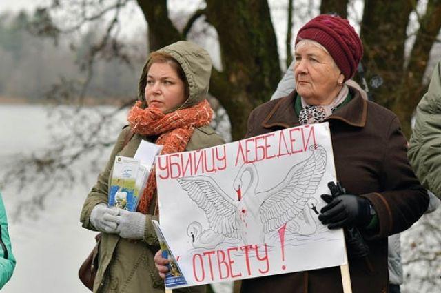 В деревне Заборье прошёл согласованный митинг в защиту лебедей.