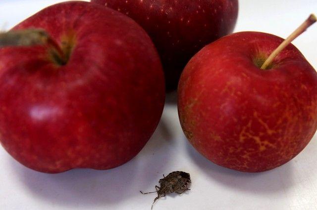 Женщина покупала сыновьям яблоки