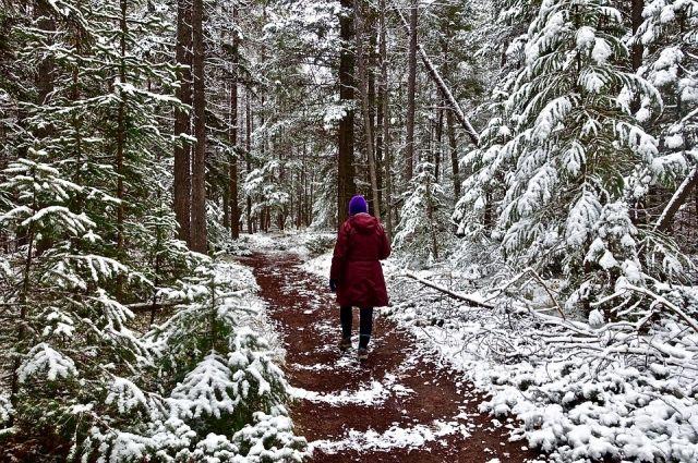 Можно прогуляться и в лесу, только одевайтесь теплее.