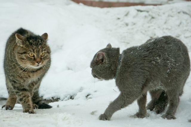 От красноярских морозов даже котики в шоке!
