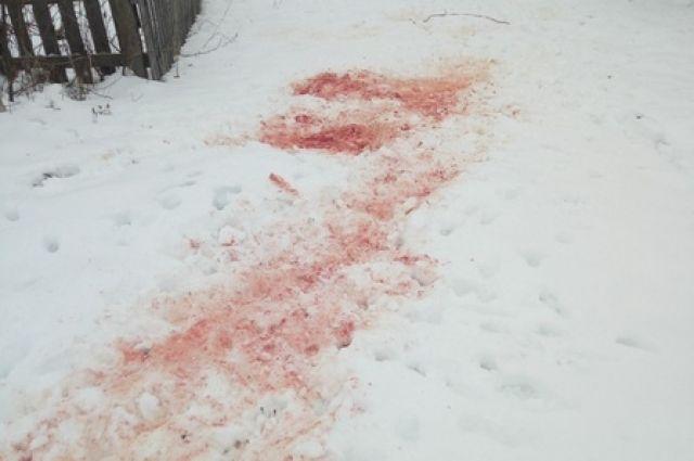 Инцидент произошёл по улице Победы,77.