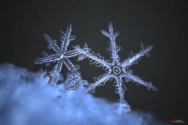 Как рассказал Андрей Пристяжнюк, для съемки ледяных кристаллов также необходимо задерживать дыхание: от его тепла снежинки тают.