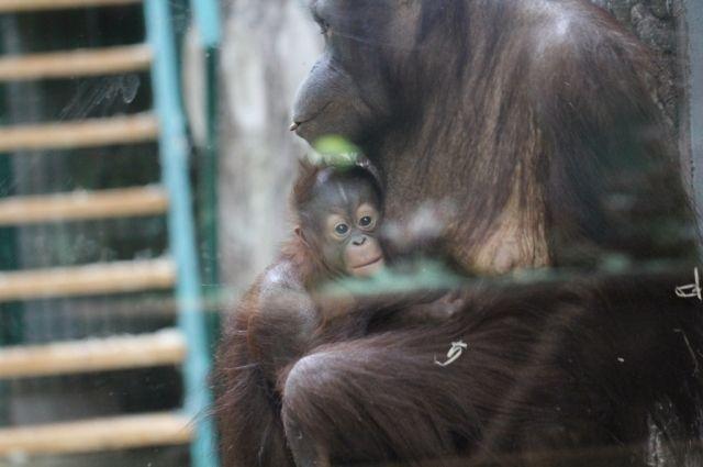 В Калининградском зоопарке отметят Международный день матери