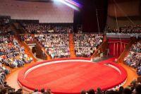 В одесском цирке используют диких животных, несмотря на запрет суда