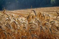 В последние годы в районе серьёзно взялись за распашку заброшенных земель.
