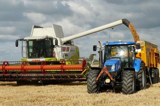 В этом году на экспорт уйдет около полумиллиона тонн зерна.