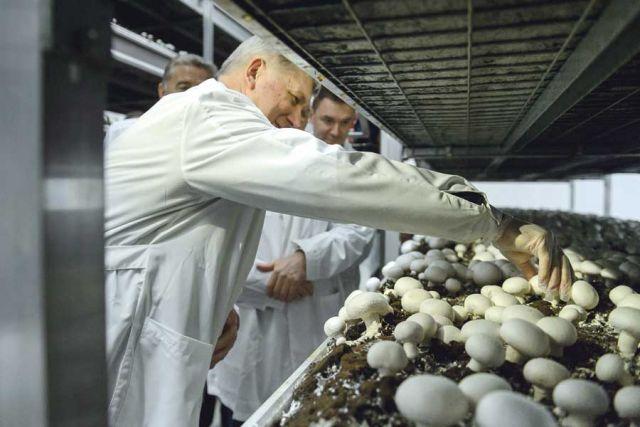 Губернатору показали камеру, в которой выращивают грибы.