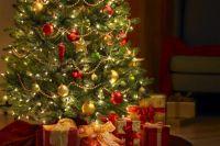 Новый год-2020: цены на праздничные деревья в разных областях Украины