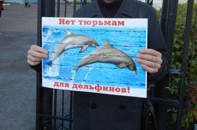 На общественные слушания зоозащитники пришли с плакатами.