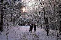 Прогулка зимой в лесу - лучшее времяпрепровождение выходного дня. Только одевайтесь теплее.