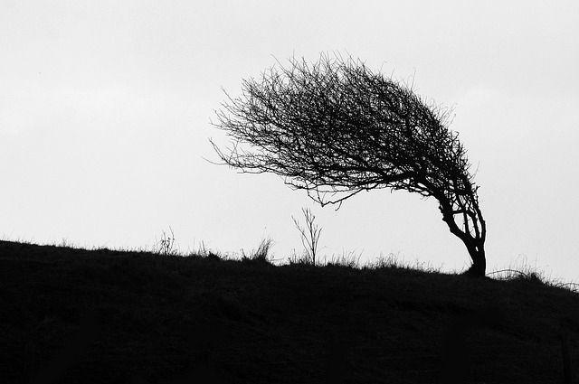 При сильном ветре лучше сидеть дома