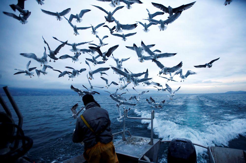 Рыбак кормит чаек на озере Невшатель в Швейцарии.