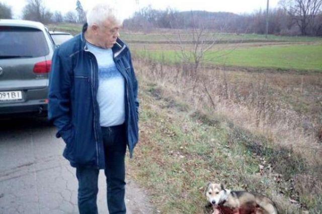 Дело живодера из Хмельницкой области: пострадавшая собака прошла экспертизу