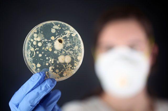 Кто кого? Если мы не сохраним антибиотики, бактерии могут погубить нас