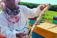 самым популярным приморским экспортным товаром остаётся мёд.