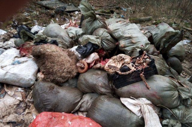 Установлена личность виновника свалки мясных отходов в тюменском лесу