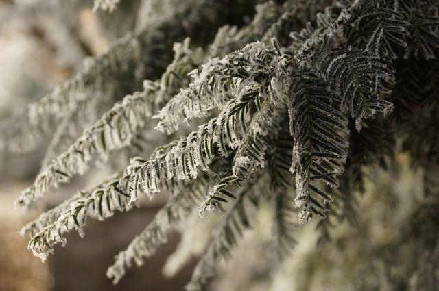 При покупке живых деревьев нужно проверять фитосанитарный сертификат.