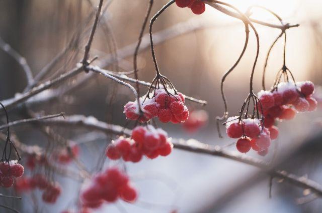 В течение месяца возможны похолодания при смещении антициклонов в более южные районы.  Самые тёплые дни придутся на вторую и третью пятидневки месяца (период с 5 по 15 декабря)