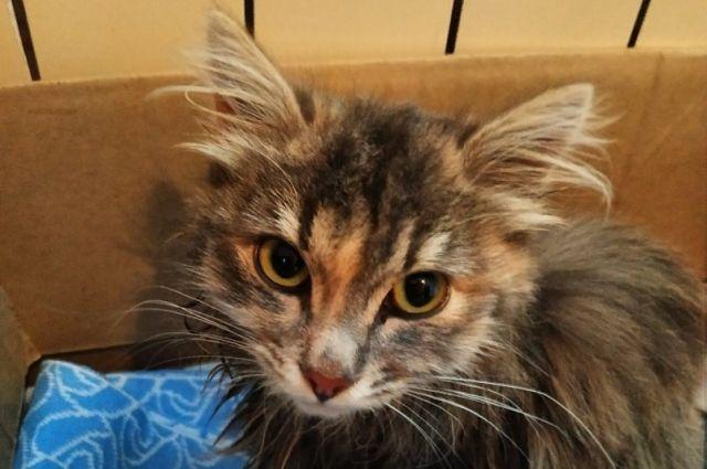 Кошку назвали Евой, ей нашли новый дом.