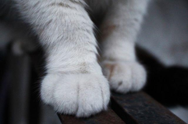 Кот-убийца в Винницкой области: домашнее животное задушило младенца