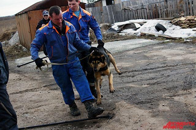 На улицах города находится около 4300 собак.