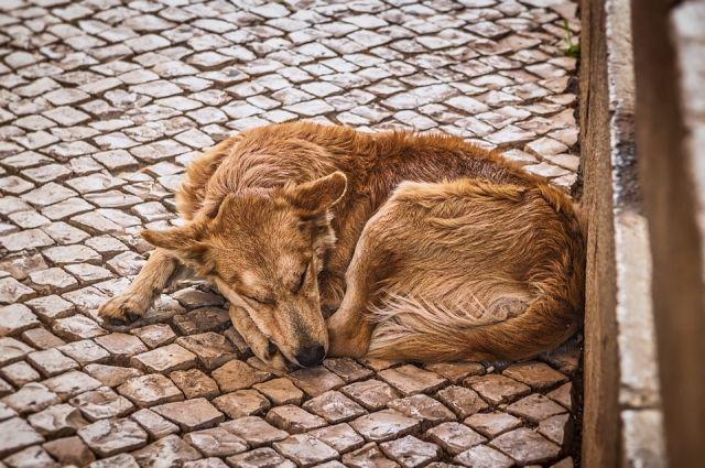 Сейчас на отлов одной собаки выделяют 2,5 тыс. рублей, нужно как минимум 8 тысяч.