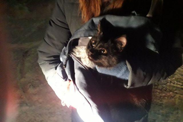 Испуганное животное двое суток мяукало на старом тополе, высотой с четырёхэтажный дом.