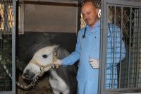 Ветеринарный врач ростовской городской станции по борьбе с болезнями животных Сергей Медяковский