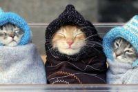 Погода на 4 декабря: Украине продолжается похолодание