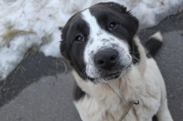 После нападения собаки двух тюменцев госпитализировали в медучреждение