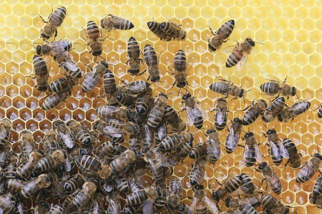 Минсельхоз Удмуртии оценил ущерб от массовой гибели пчел в 1,5 млн рублей