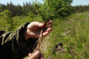 Более 1 млн деревьев высажено во время общественных акций.