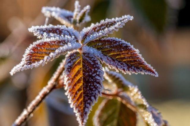 Погода на 6 декабря: в Украине продолжается потепление