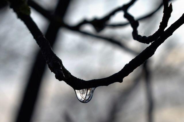 Оттепель задержится в Новосибирске еще на несколько дней, а затем придут холода до -20 градусов.