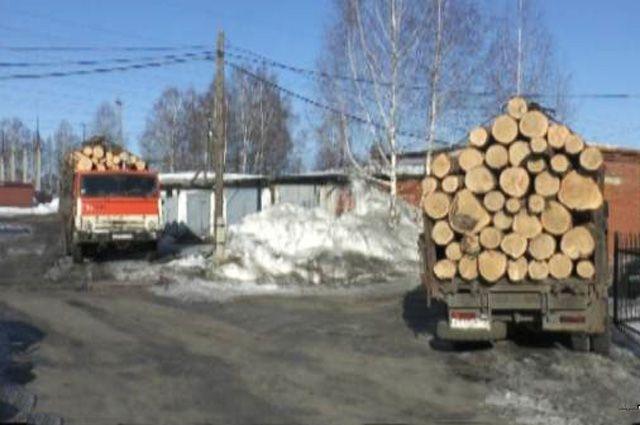 В Харьковской области незаконно вырубили леса на миллионы гривен