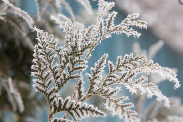 Погода на 9 декабря: в Украине продолжается потепление, местами осадки